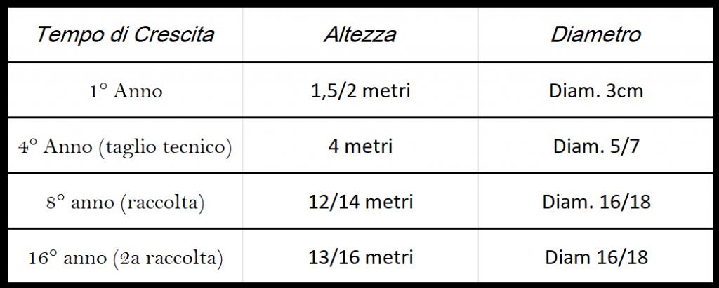 coltivare paulownia in Italia coltivare Paulownia investimento coltivazioni Pauwlonia guadagno piantagioni Paulownia filiera come si coltiva la paulownia