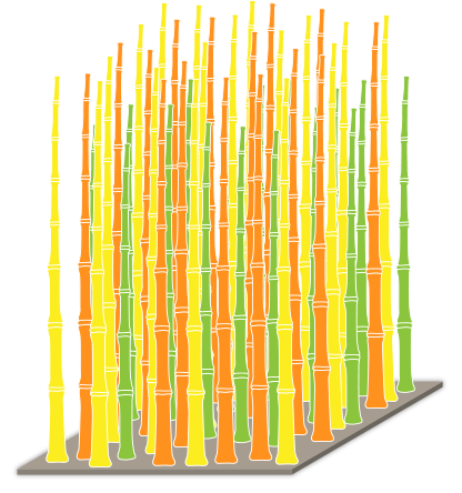 coltivare bambù gigante in italia come si coltiva il bambù gigante bambù gigante crescita bambù gigante irrigazione bambù gigante terreno