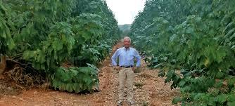 Coltivare paulownia in italia investimento guadagno e for Piccole piantagioni