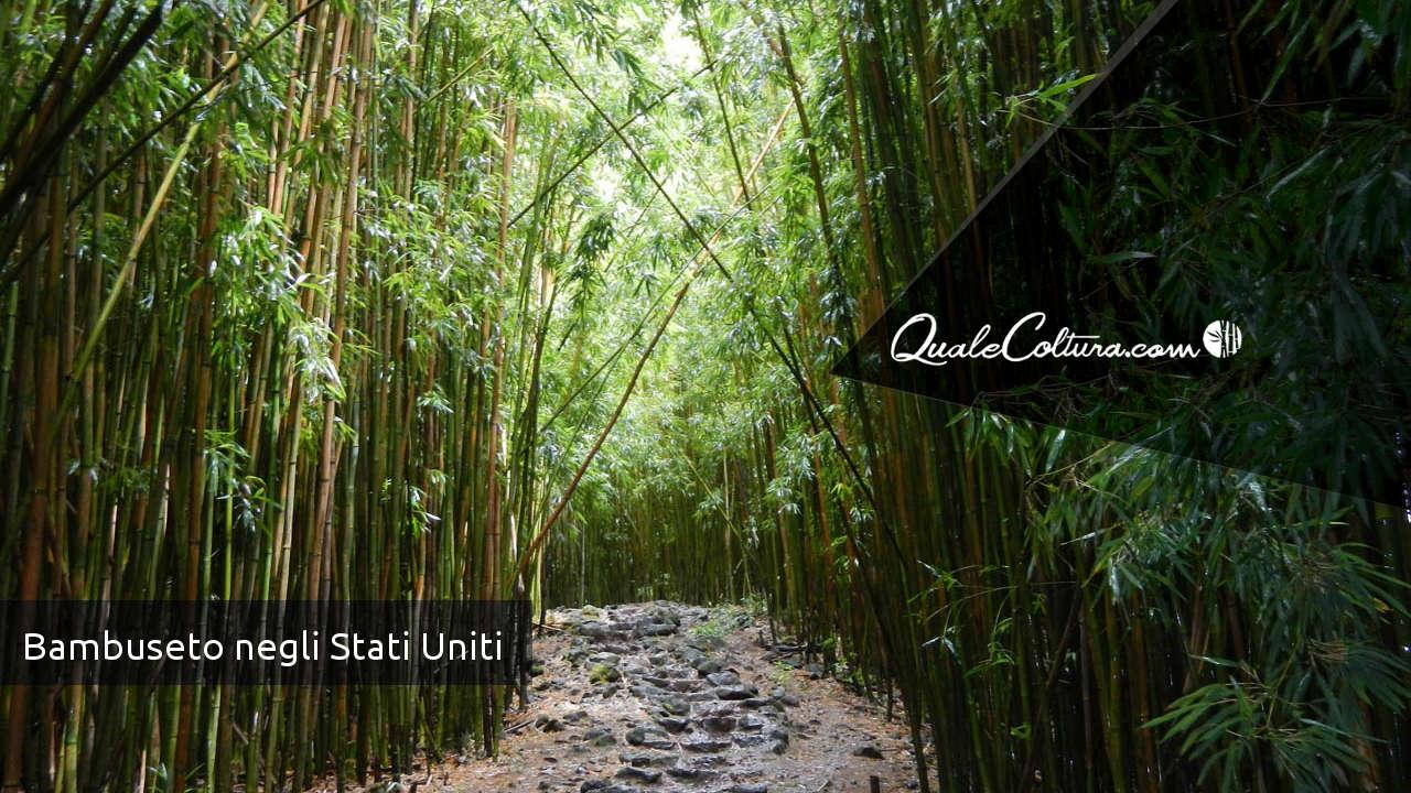 Piantagioni bambu gigante in italia for Mercato del mobile usato milano