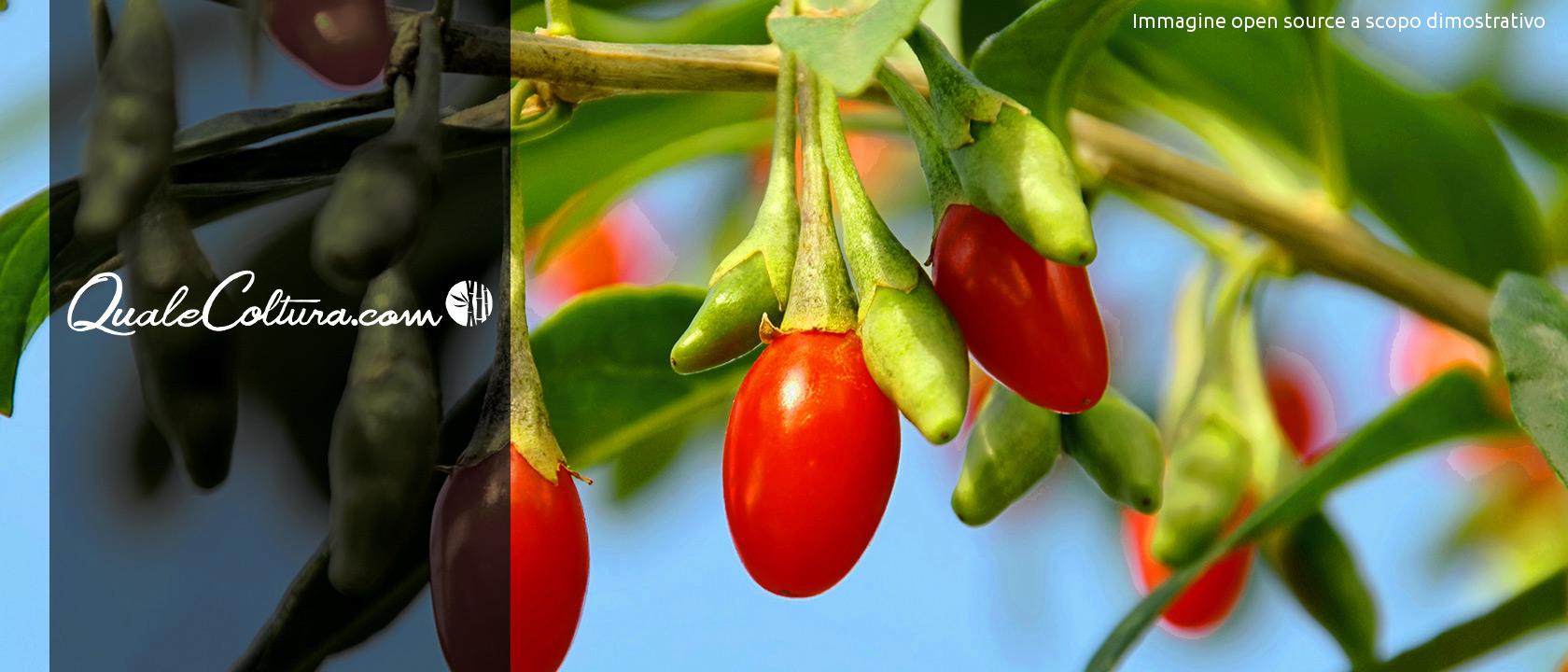coltivazioni redditizie cosa conviene coltivare quale coltura rende di più coltivazioni remunerative coltivazioni alto guadagno