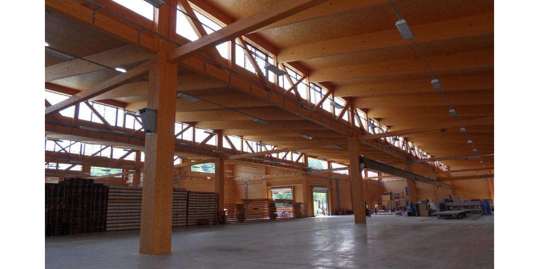bambù gigante investire nel bambù gigante vendita piante di bambù gigante consorzio bambù quanto rende il bambù