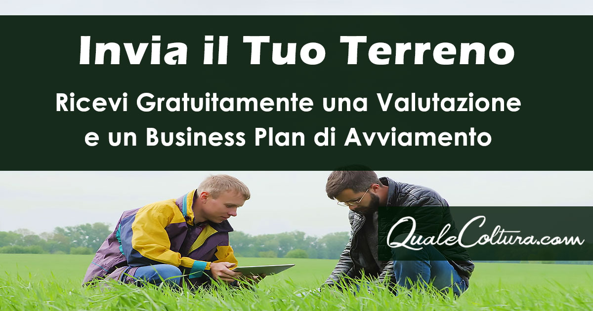 business plan coltivazione bambù