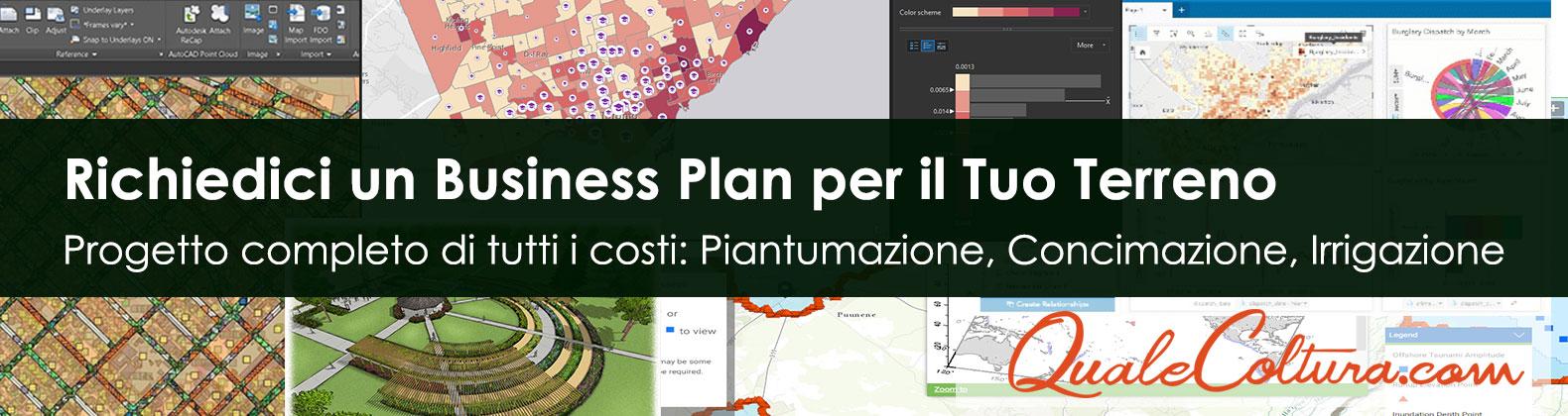 Business Plan coltivazione Bambù Gigante Moso Madake costi e ricavi irrigazione concimazione gestione raccolta filiera